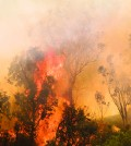 Photo from Metrocreativeconnection. com. Picture is not of Forres Mountain Fire.