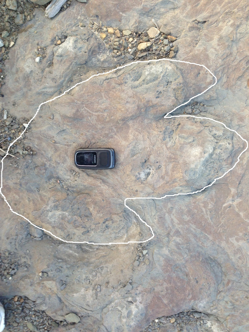 Outline of tyrannosaur track found near Tumbler Ridge on August 20. Photo: Submitted